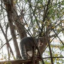 ふっくんの木登りの記事に添付されている画像