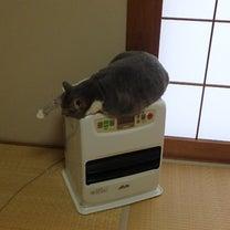 愛猫 我が家のモモちゃんのリラックスの記事に添付されている画像