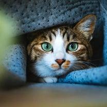 """気になる!""""世界で一番美しい猫の図鑑""""の記事に添付されている画像"""