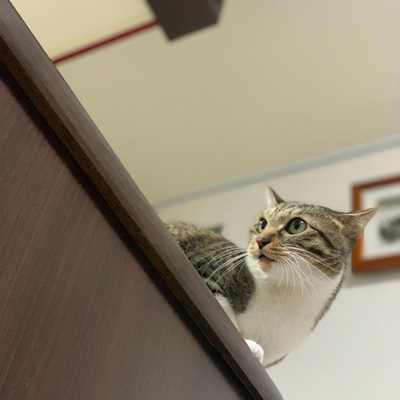 猫を下から見上げたら…。の記事に添付されている画像