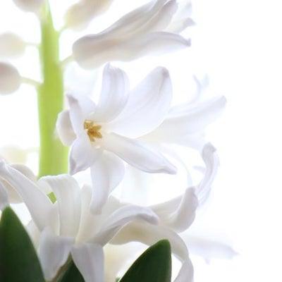 咲いています♡の記事に添付されている画像