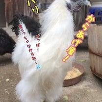 鳥さん…(*´꒳`*)→幼少期。の記事に添付されている画像