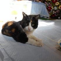 猫飼いっての記事に添付されている画像