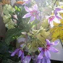 今月のお花①+おまけの記事に添付されている画像
