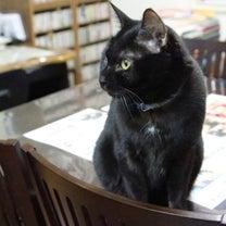 今朝の男子猫たち…の記事に添付されている画像