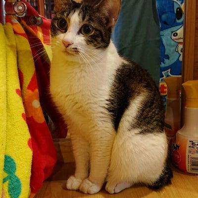 リアル猫活動「一時預かりの猫ちゃんは?里親会開催❗」の記事に添付されている画像