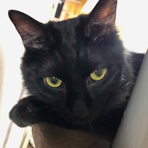 猫情報の集積所の記事に添付されている画像