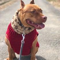 手編みのセーター あったかいね❤️の記事に添付されている画像