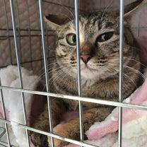 協力獣医さんにいる猫 里親募集の記事に添付されている画像