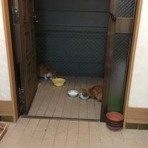 猫さん達☆の記事に添付されている画像