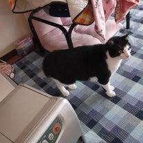猫の視線の記事に添付されている画像