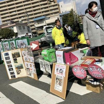 犬部さん譲渡会 & ペル君トライアル開始!の記事に添付されている画像