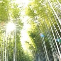 【そうだ京都に行こう】美容師のぶらり旅 ②の記事に添付されている画像