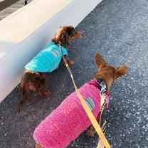 のんのん&ホクの週末のんびりロング散歩の記事に添付されている画像