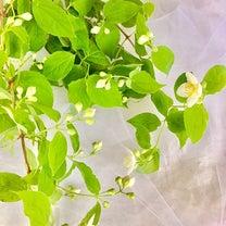 植物時間4月・5月参加募集中の記事に添付されている画像