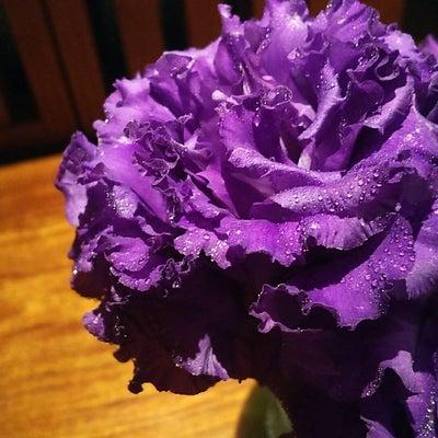 【花の色は@269】の記事に添付されている画像