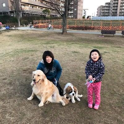 【超大型犬】日曜日はみんなで散歩の記事に添付されている画像