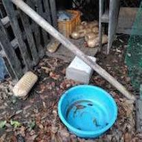 猪が合鴨の餌を盗んでいる Wild boar is stealing duck'の記事に添付されている画像
