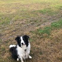 ST連合会西日本訓練競技会in姫路の記事に添付されている画像