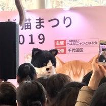 ありがとう!今日も盛況猫まつり(=^x^=)の記事に添付されている画像