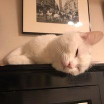 ウチの保護ネコMOMOちゃん、寝顔でほっとひと息。の記事に添付されている画像