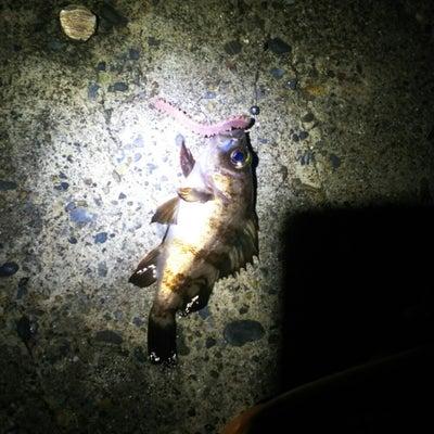 南房総夜釣りの記事に添付されている画像