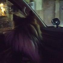 車中泊だよ❗️FCI神奈川インターナショナルドッグショー❗️の記事に添付されている画像