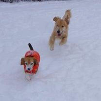 今日は雪の特異日の記事に添付されている画像
