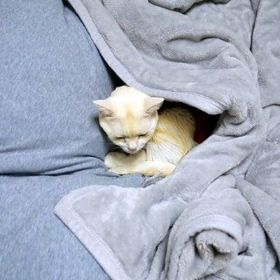 もぐもぐする猫の記事に添付されている画像