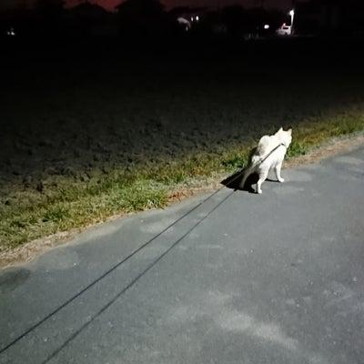 お月様の記事に添付されている画像