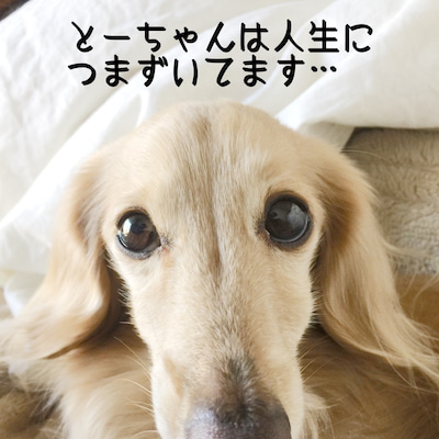 犬もコケるのか?の記事に添付されている画像