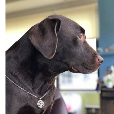 なぜ、犬がネックレスを?!の記事に添付されている画像
