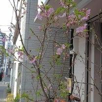 さくら咲く、華々しい午後に… 個展4日目の記事に添付されている画像