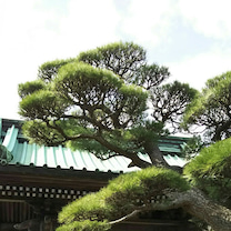 鎌倉への記事に添付されている画像