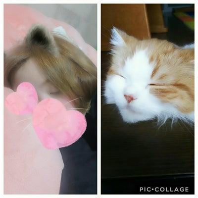 猫に寝顔が似てたらしい…❤wの記事に添付されている画像