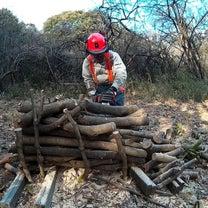 枝を薪ストーブ用の長さに切りましたの記事に添付されている画像