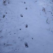 足跡…。の記事に添付されている画像