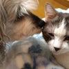 子猫のクゥー・11歳(猫風邪をひく)の画像