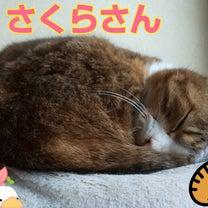 【にゃんこ】ギロッ!の記事に添付されている画像
