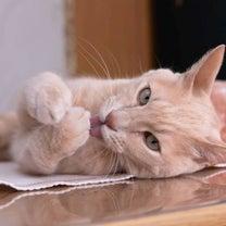 ゆず猫を素敵に撮っていただきました~!の記事に添付されている画像