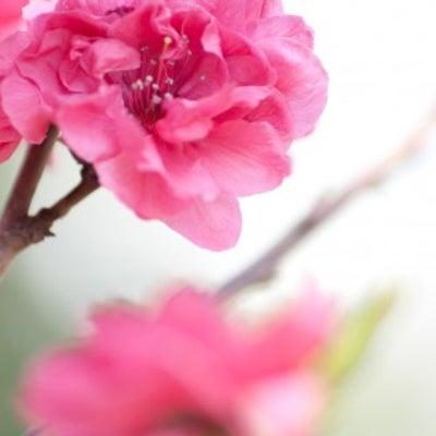 梅の香漂う春くらいピンクのスーツ?&ファッションカラー基本講座の記事に添付されている画像
