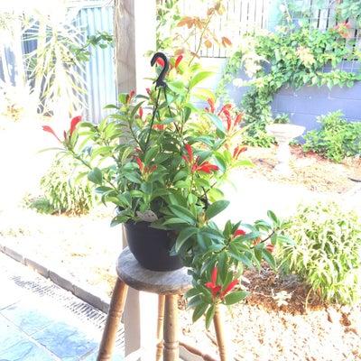 夫から鉢にはいった渋いお花をいただいたわ ( ̄+ー ̄)の記事に添付されている画像