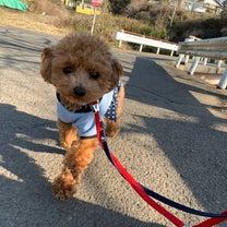 今日は犬猫特集!の記事に添付されている画像