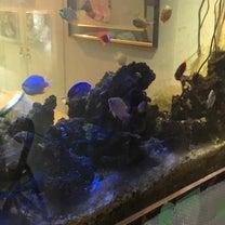 海水魚ANDワンコY 2270の記事に添付されている画像