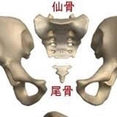 骨盤美人が姿勢を制すの記事に添付されている画像