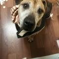 #愛犬の画像