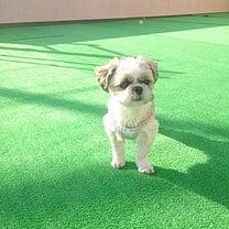 【ドックラン】緑が素敵!芝をひきました\(^o^)/の記事に添付されている画像