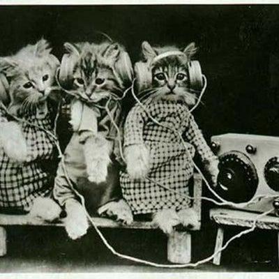 名曲揃い!<ミナクルミナキー>最終回は「タイトルに猫がつく歌」特集!の記事に添付されている画像