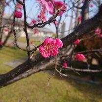 春が近づいてきたー。&おうちごはん。の記事に添付されている画像
