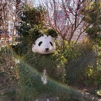 パンダには会えないなぁの記事に添付されている画像